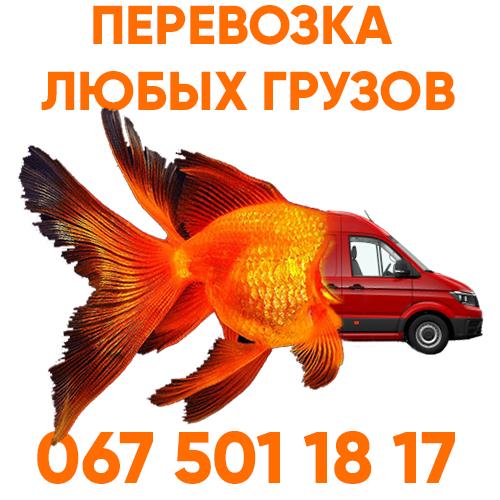Перевозка аквариумов в Киеве sun park moving красная рыбка-авто фото